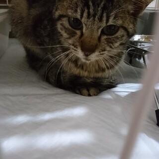 〈 一時募集停止中〉山に遺棄された仔猫。