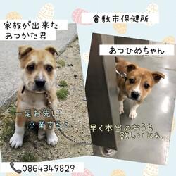 倉敷野犬子犬兄弟物語→全頭譲渡決定!