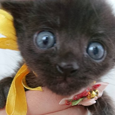 黒猫ズの写真