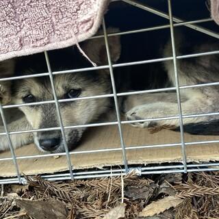 トライアル中!山の中に遺棄された仔犬