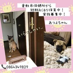 倉敷っ子あつよちゃんのお泊り保育一日目→譲渡決定!