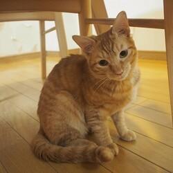 猫のはこぶね出張里親会 サムネイル3