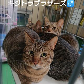 飼主持込の猫たち(T皿T) ※男のコ用