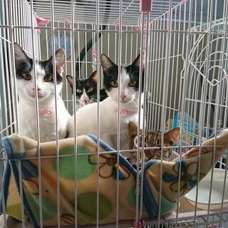 飼主持込の猫たち(T皿T) ※女のコ用