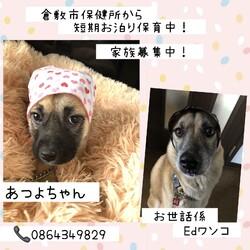 倉敷っ子あつよちゃんのお泊り保育二日目→譲渡決定!