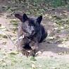 甲斐犬の若くん 4~5歳位 サムネイル5