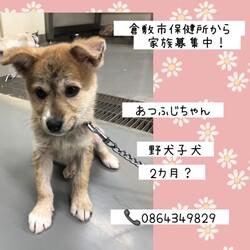 倉敷の皮膚病改善中野犬子犬たち