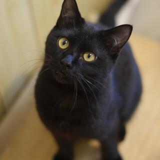 ナムルはとてもフレンドリーな猫!