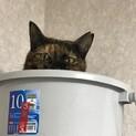 人しか好きじゃない冷蔵庫の上のラップンツェル❤️