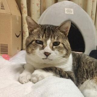 【メルじぃ】穏やかなおじいちゃん猫