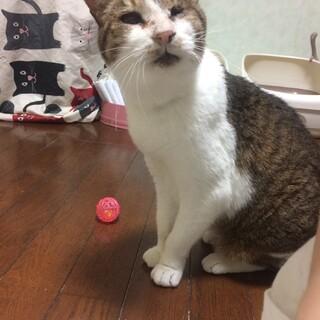 【おたま】飼い主独占希望のおばあちゃん猫