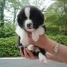 保護犬ナンバーD1384 中型ミックス犬子犬