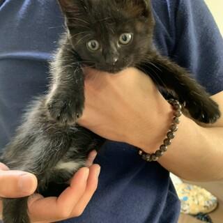 かわいい黒子猫ちゃん