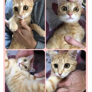 子猫 メス  生後約5か月