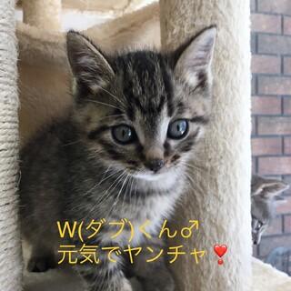 W(ダブ)くん