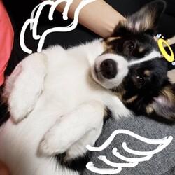 天使でしょうか?