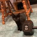 5兄妹の黒子猫 ハーレー君