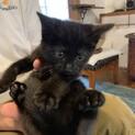 5兄妹の黒子猫 ポニョ君