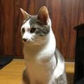 楽しい猫、アンちゃん