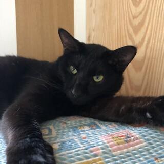 穏やかな 黒猫 彦くん
