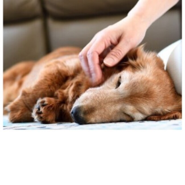 ボランティア団体 犬のM基金のカバー写真