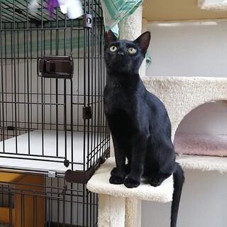 スタイリッシュな黒猫・トノくん