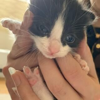 トラブルからの保護猫さんに子猫が産まれました