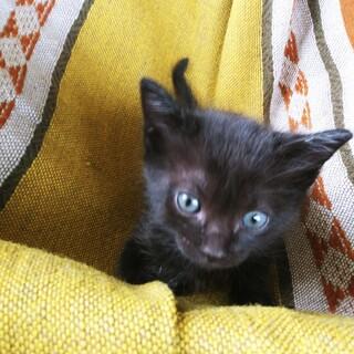 子猫3月半ば生まれ