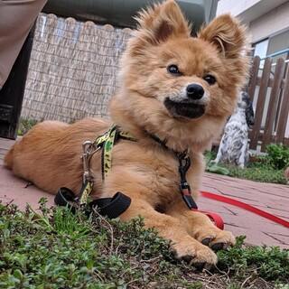 ポップちゃん少し臆病な5kgの成犬です♡