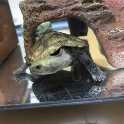 亀が首を曲げる