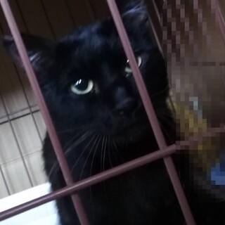 ネグレクト飼育から保護した黒猫♂てるやくん