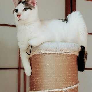 じみーな大人猫、性格よし。