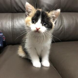 【写真追加】可愛い三毛猫ちゃんです