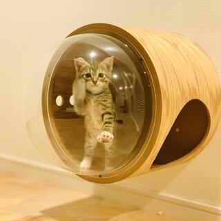 寄り添って生きる子猫たちに家族を見つけてあげたい。