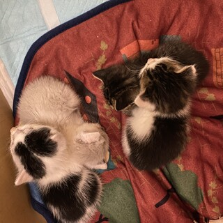 とっても可愛い子猫4兄弟