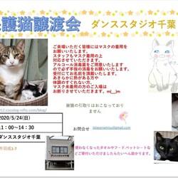 保護猫譲渡会 サムネイル1