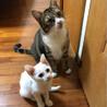 保護猫が出会った幸せ