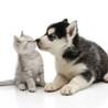 一般社団法人 犬猫ソーシャル・ネットワーク