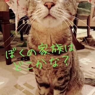 ボクは人が大好きで甘えん坊ニャ(=゚ω゚=)