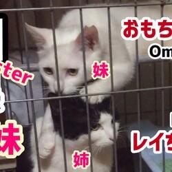 【レイ+おもち】白黒姉妹