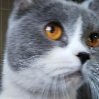 スリスリ大好きな甘えん坊猫ちゃん