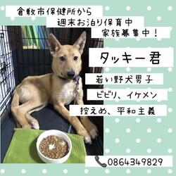 倉敷っ子タッキー君お泊り保育一日目→譲渡決定!
