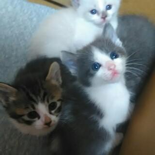 仔猫が生まれました。トライアルは7月以降です