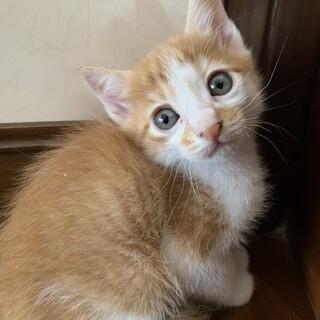生後2ヶ月の仔猫の里親募集しています!