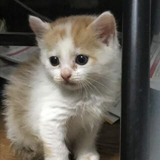 保護猫の里親を募集しています。