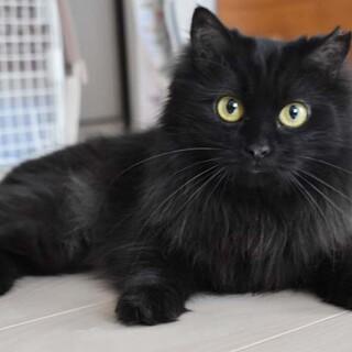 長毛黒猫の女の子