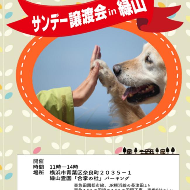 特定非営利活動法人 保健所の成犬・猫の譲渡を推進する会のカバー写真