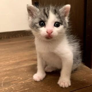 募集一時停止 人慣れバッチリのメスの子猫ちゃん