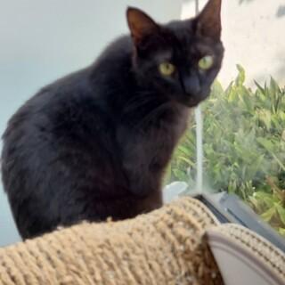 黒い美猫のくうちゃんです♡