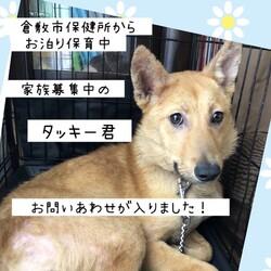 倉敷っ子タッキー君お泊り保育最終日→譲渡決定!